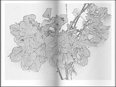 Est faltando cor! (Angelica Takche) Tags: flores rabiscos vida suavidade