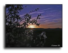 LA CARICIA DEL AMANECER  EN LOS  ALMENDROS (Carmen Q.1) Tags: luz flor amanecer suave frutos caricia almendro oltusfotos panoramafotogrfico mygearandme dblringexcellence flickrstruereflection1 remembertha