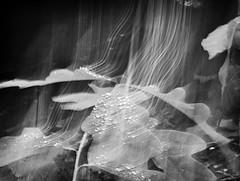 Tears of Angels (CraptasticPhotog) Tags: blackandwhite bw leaves rain drops waterdrops ghostly fallcreekfalls