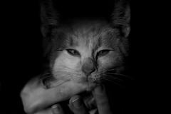 fino all'ultimo resto di noi ([no direction]) Tags: bw white black cat canon bn gatto bianco nero soe aclass nodirection flickrsbest