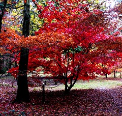 Red Tree Queenswood Leominster Hereford #dailyshoot (Leshaines123) Tags: red nature herefordshire hereford dailyshoot oakword