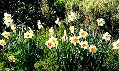 Happy March 8 (solerena) Tags: flowers 2012 march8 scyllaandcharybdis goodandthebest