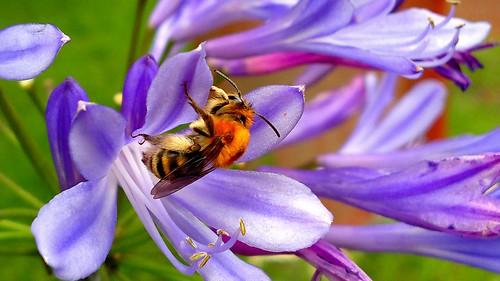 @nokia a bumblebee by my #Nokia N8 #nokiaswag!