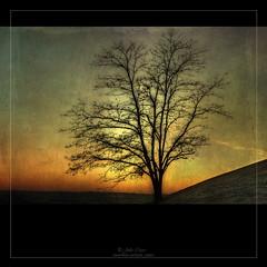 Hasta mañana (Julio_Castro) Tags: parque atardecer nikon árboles nikond70s cielo ocaso texturas thegalaxy lastetas juliocastro parquedeltiopio rememberthatmomentlevel4 rememberthatmomentlevel1 rememberthatmomentlevel2 rememberthatmomentlevel3