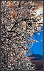 Spring (massimoleonardi) Tags: art apple model sony niksoftware borderfx aperture3 nex5 captureonepro6 perfectphotosuite