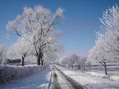 Fillingham Lane (John Spooner) Tags: road winter snow tree frost lincolnshire willingham dn21