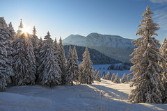 Morning Glory (Philipp Klinger Photography) Tags: morning blue schnee trees winter light shadow sky sun mountain snow ski france mountains alps cold tree nature yellow forest montagne alpes greno