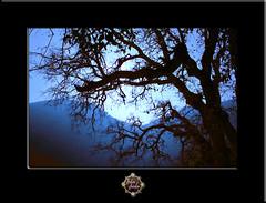 Wildwood Aurora (John Jardin) Tags: blue trees nature forest twilight woods flickr glow bare branches award aurora trolled