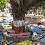 "Prayer Mats at Mahabodhi Temple <a style=""margin-left:10px; font-size:0.8em;"" href=""http://www.flickr.com/photos/14315427@N00/6875046865/"" target=""_blank"">@flickr</a>"