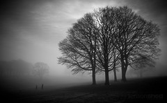 Through Fog Comes Light (lemonshed) Tags: park trees sky blackandwhite dog fog photoshop landscape play hill sigma 1020mm walkers sthelens sutton 2012 lightroom merseyside 600d fourtrees sherdleypark 2walkers canon600d