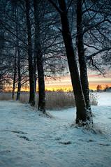 Winter trees (- David Olsson -) Tags: morning trees winter snow cold reed nature sunrise river landscape dawn early nikon sweden branches footprints sigma karlstad klarälven february 1020mm 1020 2012 värmland wintry sjöstad d5000 davidolsson 2exposuremanualblend ginordicfeb12