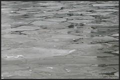 2012-02-12 Rotterdam - IJs in de Rijnhaven - 13 (Topaas) Tags: winter rotterdam kopvanzuid ijs rijnhaven natuurijs sonya77 sonyslta77 sonyslta77v