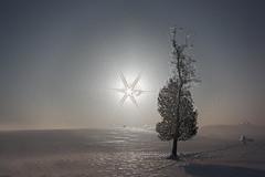 Neve lucida (Gianni Armano) Tags: stella photo piemonte neve sole gianni paesaggio collina 2012 alessandria pianta febbraio lucida armano cuccaromonferrato