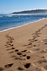 Tracks (ChrisInAK) Tags: hawaii kilauea beach coast furl island kauai ocean relax sand sea shore swim tourism tracks travel trees tropical tropics vacation water waves