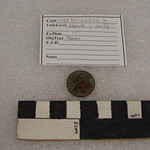 "<b>1981.13PK53.56.7</b><br/> Coin; Penny, Terrace Hill<a href=""http://farm8.static.flickr.com/7044/6941410211_97e3ae79c8_o.jpg"" title=""High res"">∝</a>"