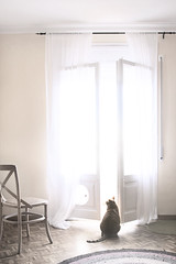 Woody. (Berni Solé.) Tags: windows cat ventana chair finestra gato silla gat berni cadira solé
