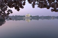 early morning cherries (beverly underwood) Tags: morning pink flower dawn washingtondc spring cherries jeffersonmemorial cherrytree tidalbasin