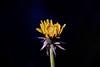 """vita ("""" paolo ammannati """") Tags: flowers macro primavera spring shot top natura fiori petali colori bosco fioritura paoloammannati effettinaturali"""
