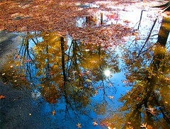 A Star in a Puddle (Stanley Zimny (Thank You for 16 Million views)) Tags: park autumn trees sun lake ny reflection tree fall nature water colors leaves automne catchycolors puddle star leaf colorful colours seasons natural fallcolors herbst autumncolors fourseasons burst reflexions autunno autumnal colorexplosion 4seasons rockland otono sgis ahorn naturephotos jesien natureimages jesiennie blinkagain bestofblinkwinners