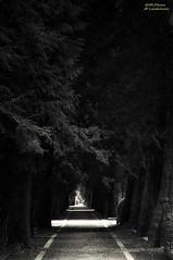 A long way (.Markus Landsmann) Tags: light blackandwhite bw friedhof cemetery dark licht flickr pentax cologne sigma tunnel kln explore sw avenue allee schwarzweis sigmaapo sigmaapo70300 k20d pentaxk20d mlphoto mlphoto dunkelpentax markuslandsmannzenfoliocom