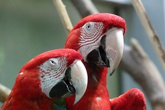 """Love Birds • <a style=""""font-size:0.8em;"""" href=""""http://www.flickr.com/photos/77994446@N03/7001067778/"""" target=""""_blank"""">View on Flickr</a>"""