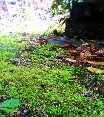 Carpet of moss