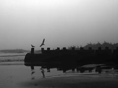 world without color (nosha) Tags: ocean new sea usa bird beach water beautiful beauty pier newjersey grove nj og shore jersey jerseyshore avian 2012 lightroom oceangrove oceangrovenj nosha asburyparknewjerseyusa olympusepl3