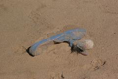 slipper (Sandy Beach Cat) Tags: uk outdoors scotland pentax lothian lowcontrast infocus highquality k10d
