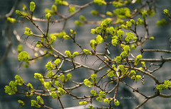Spring II (Zagros.os) Tags: flowers wallpaper tree green nature leaves photo leaf spring seasons bokeh