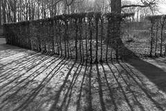Shadow (gambajo) Tags: park shadow bw white black contrast deutschland shadows natur pflanzen sw orte bume schlosspark schwarz nordrheinwestfalen brhl weis bume brhl vision:outdoor=0968