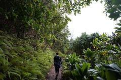 DSC02210 (mylifeaskirk) Tags: hawaii kauai kalalau hanakapiai