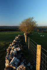 Evening light on a Stone Wall. (Mat Price) Tags: fence stonewall dpp llandegla canon1740mm canon70d cokinpolarizingfilter
