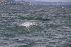 IMG_1286.jpg (blubberli) Tags: schweiz wasser wind zrich ch wellen zrichsee sturm fischen wdenswil