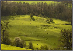 Sheep . (Picture post.) Tags: trees sunlight green nature landscape interestingness shadows sheep hills paysage arbre springtime