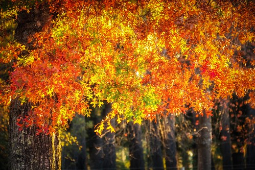 Mt Macedon Autumn Colours-9
