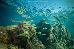 JCG_1658pk (Garca Franco AQua-CliCk) Tags: underwater lanzarote scuba diving fotosub ikelite angelshark nikond300 tokina1116