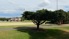 Sydney Park - Snt Peters - NSW (12) (nicephotog) Tags: park game building green nature stand suburban outdoor path walk recreation seating stroll oval