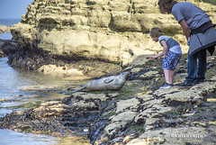 Lovely encounter of Seal & boy, Selwicks Bay, Flamborough (MichikoSmith) Tags: uk blue sea england cliff beach water rock canon eos bay yorkshire north stack east riding 6d flamborough selwick