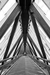 2016-06-19 (schauplatz) Tags: wood bridge summer blackandwhite vertical architecture river deutschland blackwhite sommer structure diagonal architektur schwarzweiss brcke holz badenwrttemberg schwarzweis neckarufer fusgngerbrcke