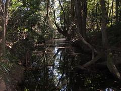 DSCF7065 (SEQ Catchments) Tags: rainforest subtropical lowland