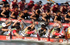 Dragon Boat paddlers (jensen_chua) Tags: sports photography singapore asia action regatta watersports dragonboat sportsman rowers sportsphotography