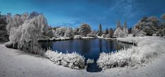 Sandringham Lakes in Infrared (David Baterip) Tags: uk blue trees england panorama white reflection rural ir countryside outdoor norfolk lakes royal infrared irphotography waer d80 590nm
