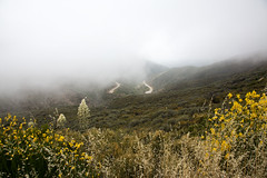 California 33 near Ojai. (El Cajon) Tags: road winding