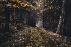 path into the unknown (philipp_mitterlehner) Tags: nature forest landscape outside austria hiking exploring perspective adventure views lookslikefilm retrocolours d810 pathintotheunknown