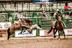 Takeoff (Blue Trail Photography) Tags: horse canada grande cowboy action alberta rodeo bronco prairie buck bucking stompede