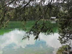 Branches overhanging Planšarsko jezero, lake in Jezersko, Slovenia (Paul McClure DC) Tags: architecture scenery slovenia slovenija jezersko gorenjska may2016