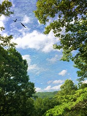 Asheville Summer Sky (jeanne.marie.) Tags: blue trees summer sky mountains green texture birds clouds colorful silhouettes elkmountain ashevillenc iphoneography iphone5s
