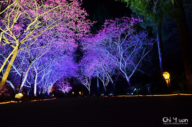 九族文化村櫻花祭18.jpg