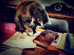 Feline Inspection (spoedman) Tags: moleskine notebook journal stationary midori spoedman christophelaurent notebookism chronodex midoritraveljournal