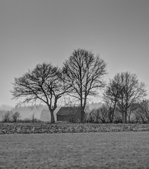 Trees and a Shed (baumbaTz) Tags: trees blackandwhite bw monochrome field canon rebel kiss shed feld m42 handheld sw manual grayscale pentacon schwarzweiss bäume hdr greyscale 135mm x3 500d graustufen 3exposures shuppen t1i